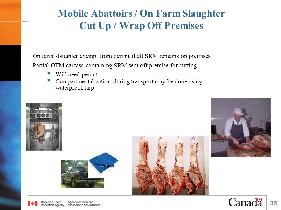 35 Mobile Abattoirs / On Farm Slaughter Cut Up / Wrap Off Premises On farm slaughter exempt from permit if all SRM remains on premises Partial OTM carcass containing SRM sent off premise for cutting  Will need permit  Compartmentalization during transport may be done using waterproof tarp