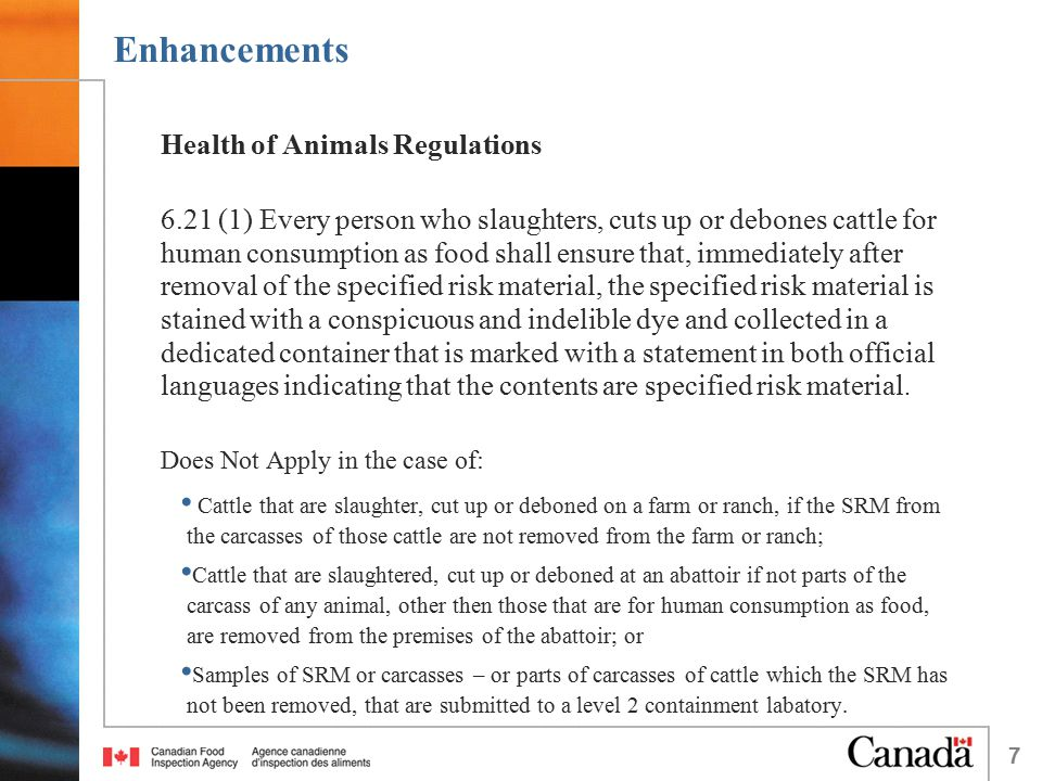7 Enhancements Health of Animals Regulations 6.21 (1) Every person who slaughters, cuts up or debones cattle for human consumption as food shall ensure that, immediately after removal of the specified risk material, the specified risk material is stained with a conspicuous and indelible dye and collected in a dedicated container that is marked with a statement in both official languages indicating that the contents are specified risk material.