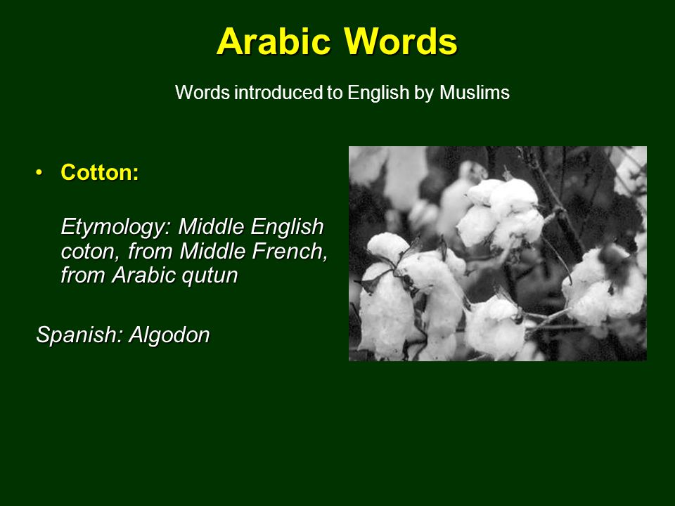Arabic Words Arabic Words Words introduced to English by Muslims Cotton:Cotton: Etymology: Middle English coton, from Middle French, from Arabic qutun Spanish: Algodon