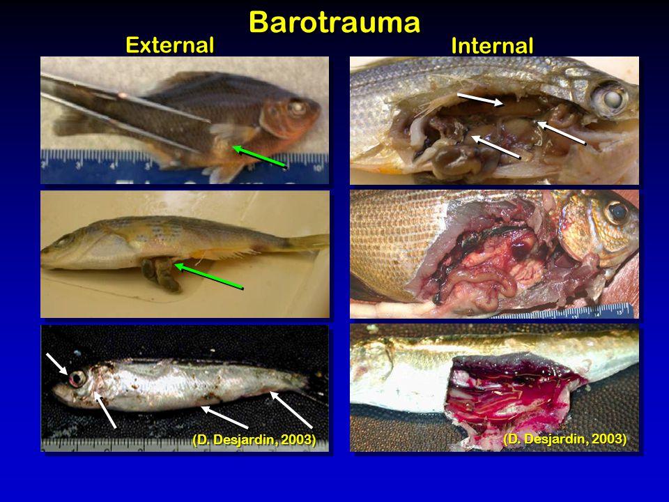 (D. Desjardin, 2003) Barotrauma External Internal (D. Desjardin, 2003)