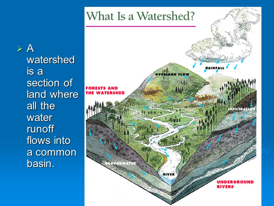  A watershed is a section of land where all the water runoff flows into a common basin.