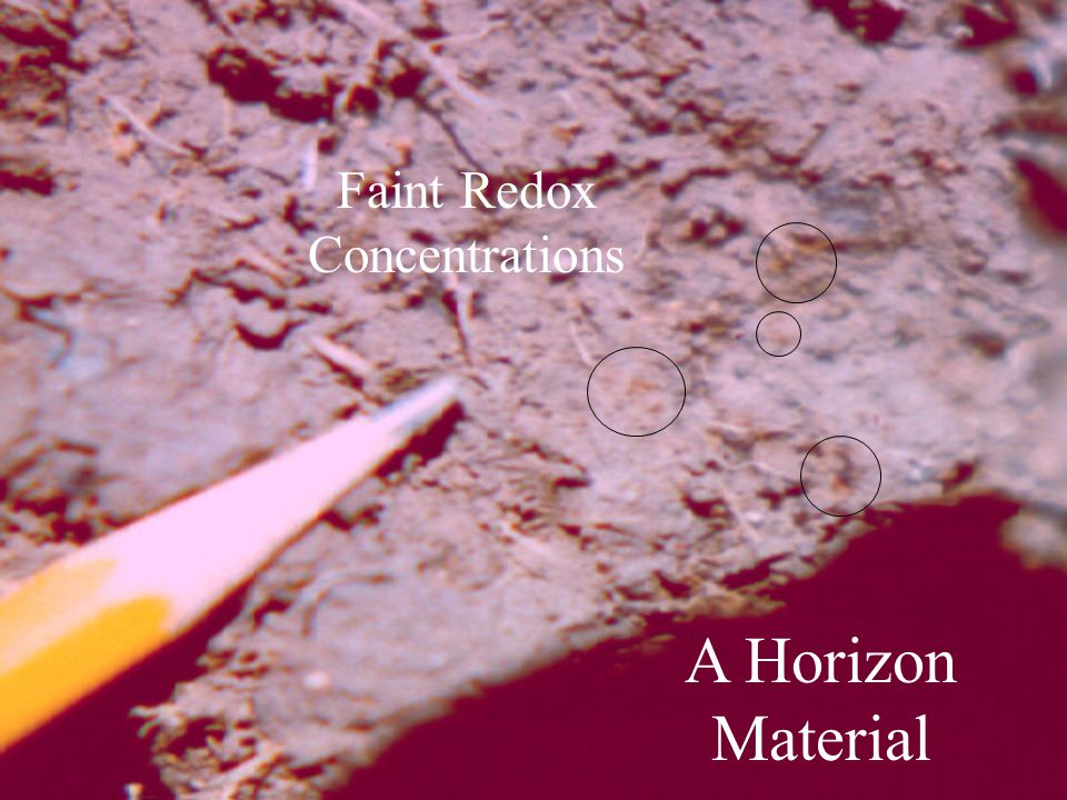 A Horizon Material Faint Redox Concentrations