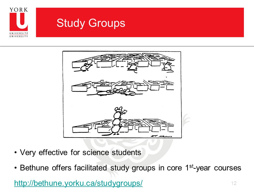 Study Groups Very effective for science students Bethune offers facilitated study groups in core 1 st -year courses http://bethune.yorku.ca/studygroups/ 12