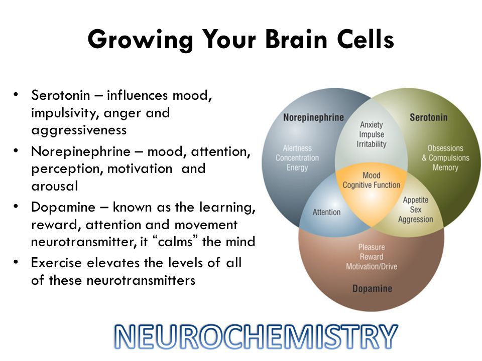 Growing Your Brain Cells Serotonin – influences mood, impulsivity, anger and aggressiveness Norepinephrine – mood, attention, perception, motivation and arousal Dopamine – known as the learning, reward, attention and movement neurotransmitter, it calms the mind Exercise elevates the levels of all of these neurotransmitters