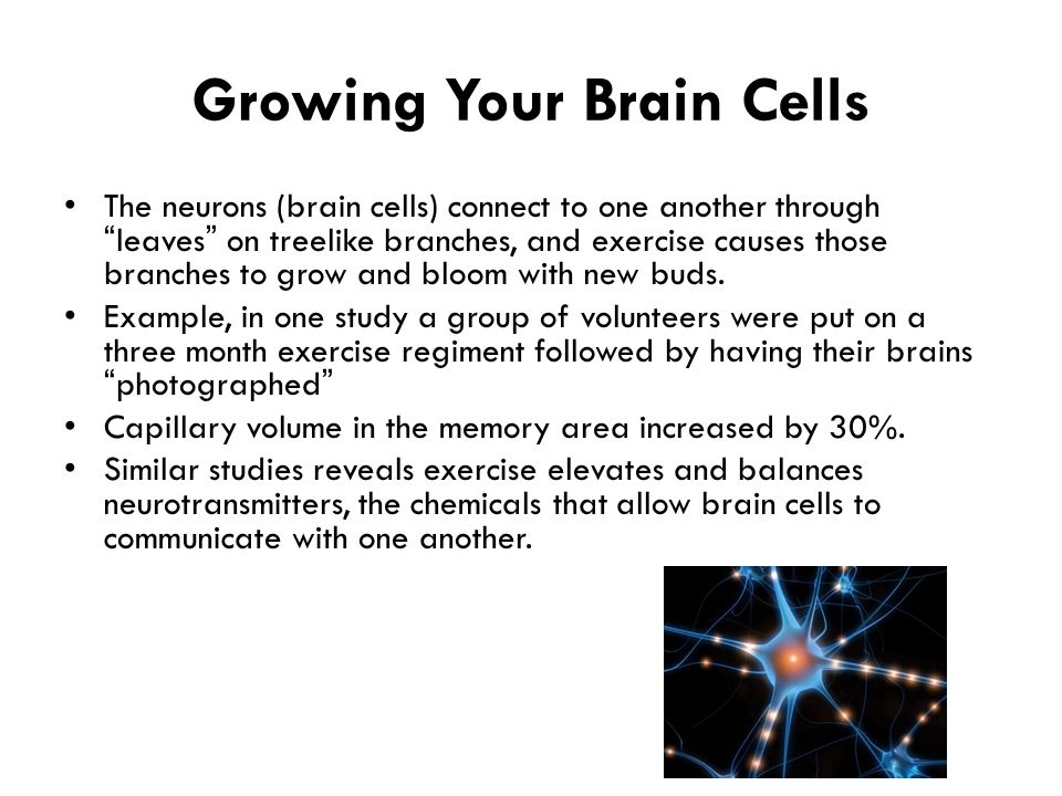 """Growing Your Brain Cells The neurons (brain cells) connect to one another through """"leaves"""" on treelike branches, and exercise causes those branches to"""