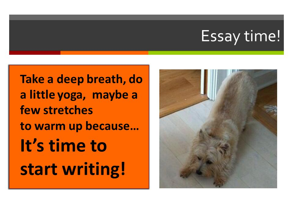 Essay time! Take a deep breath, do a little yoga, maybe a few stretches to warm up because… It's time to start writing!