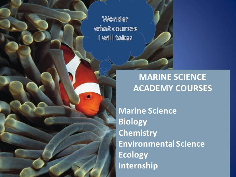 Click to edit Master text styles Second level Third level Fourth level Fifth level MARINE SCIENCE ACADEMY COURSES Marine Science Biology Chemistry Environmental Science Ecology Internship