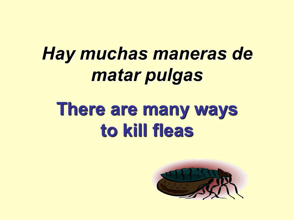 Hay muchas maneras de matar pulgas There are many ways to kill fleas