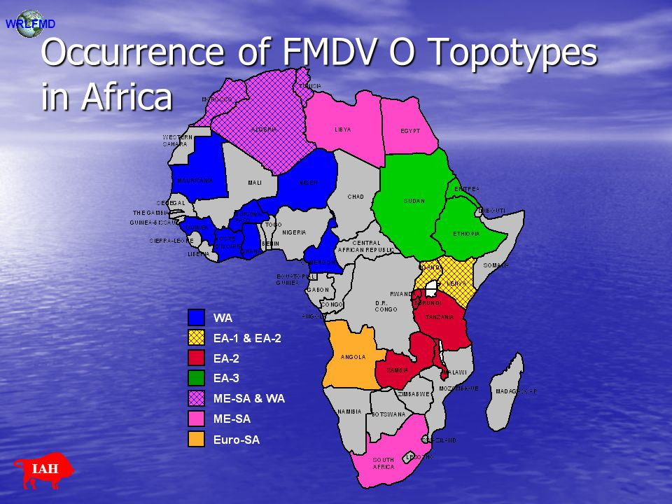 Occurrence of FMDV O Topotypes in Africa WRLFMD IAH
