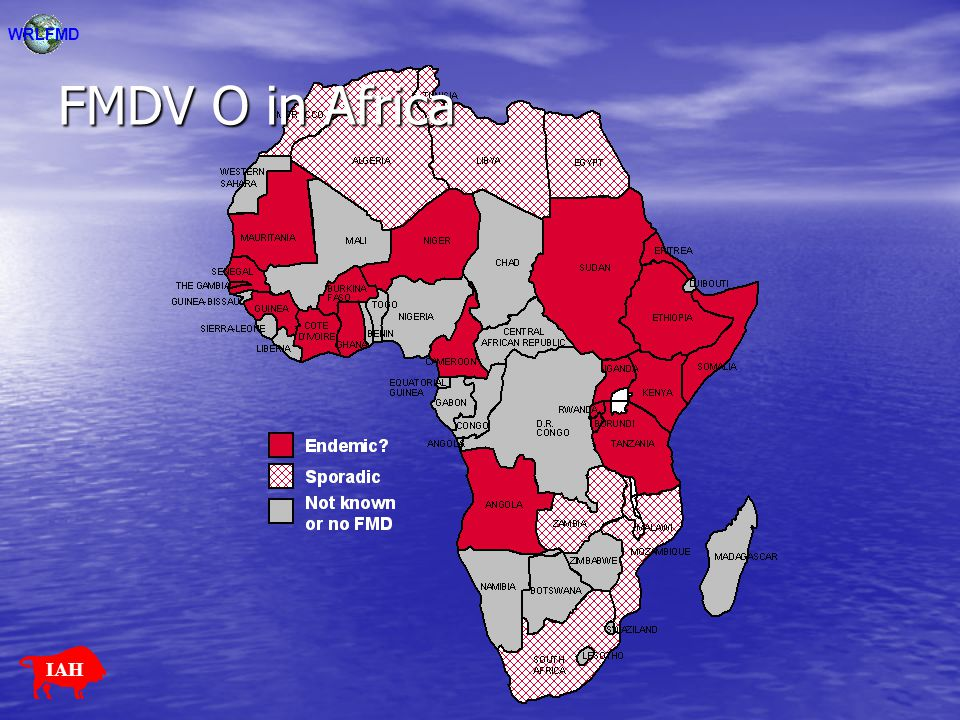 Previous studies Few studies on the European FMDV serotypes in Africa: Few studies on the European FMDV serotypes in Africa: –Knowles et al., 1998 (type A) –Samuel et al., 1999 (type O) –Samuel & Knowles, 2001 (type O) –Sangare et al., 2001 (type O) –Sahle et al., 2004 (type O) –Bronsvoort et al., 2004 (types O & A) Distinct genetic lineages of both FMDV-O and FMDV-A circulate in East and West Africa and viruses occurring in North Africa may be introduced from a variety of sources (Europe, South America, Middle East and West Africa).