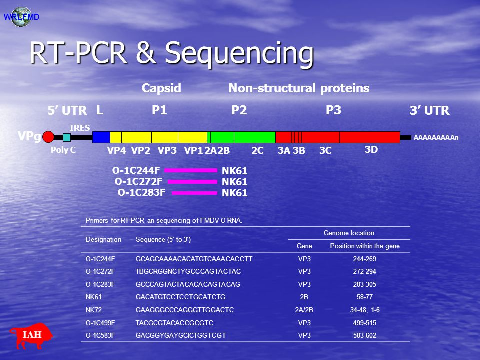 RT-PCR & Sequencing AAAAAAAAAn LP1P2P3 5' UTR3' UTR VPg VP4VP2VP3VP12A2B2C3A3B3C 3D Poly C CapsidNon-structural proteins IRES WRLFMD Primers for RT-PC