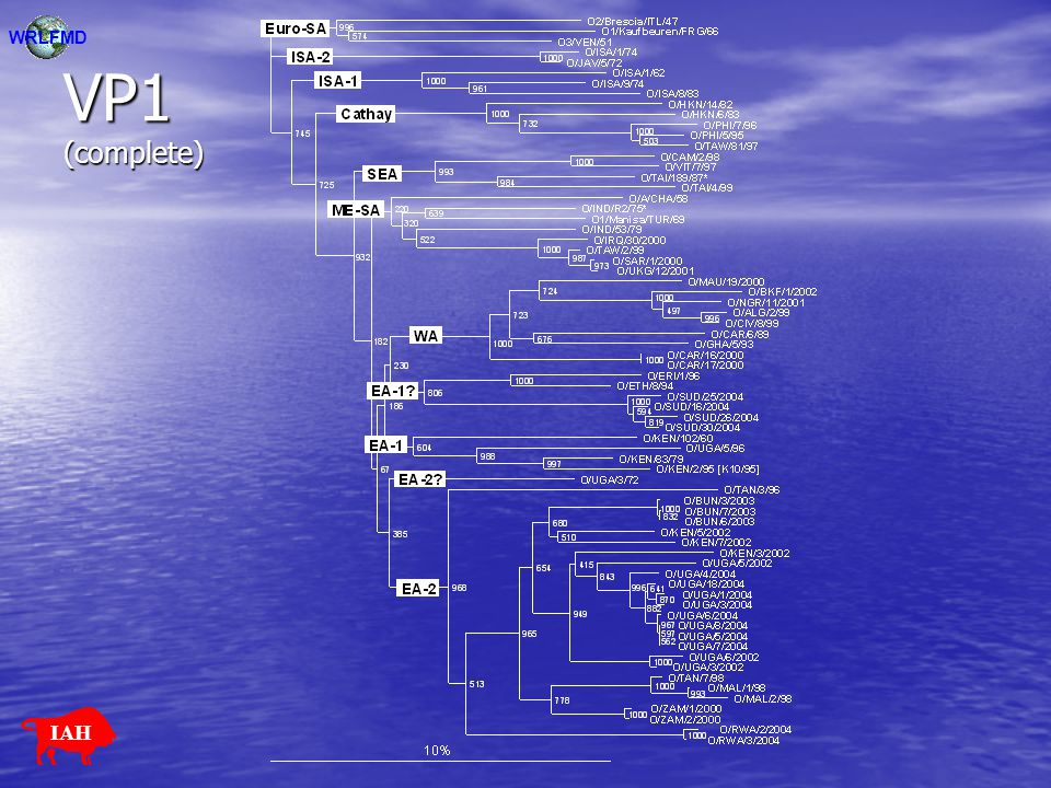 VP1 (145-642) WRLFMD IAH