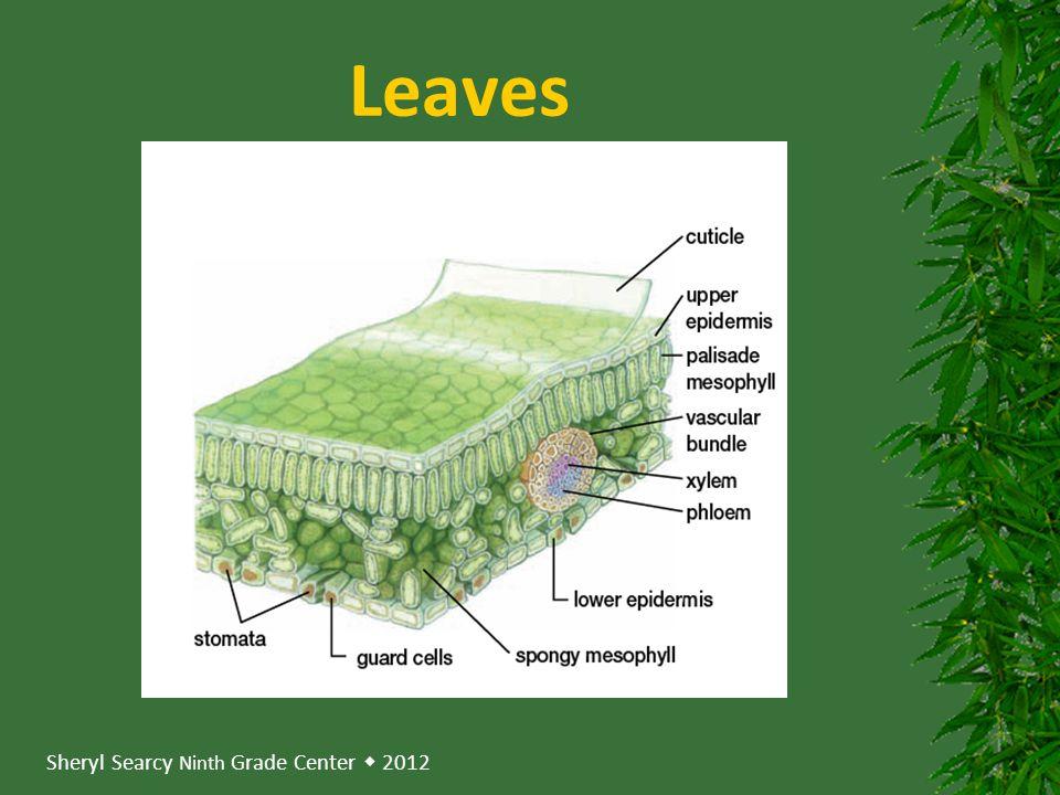 Sheryl Searcy Ninth Grade Center  2012 Leaves