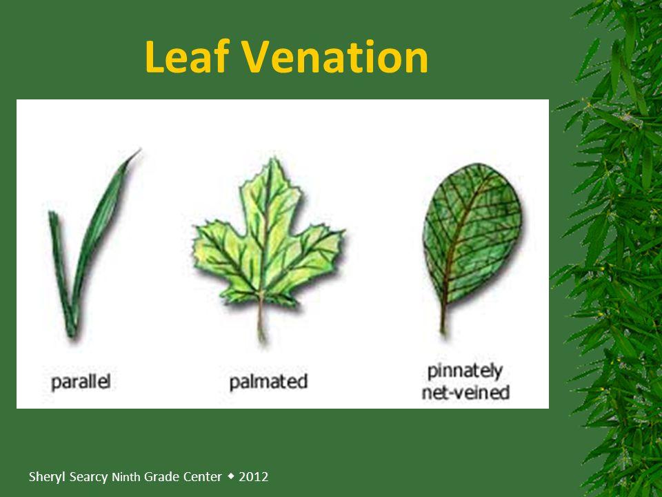 Sheryl Searcy Ninth Grade Center  2012 Leaf Venation
