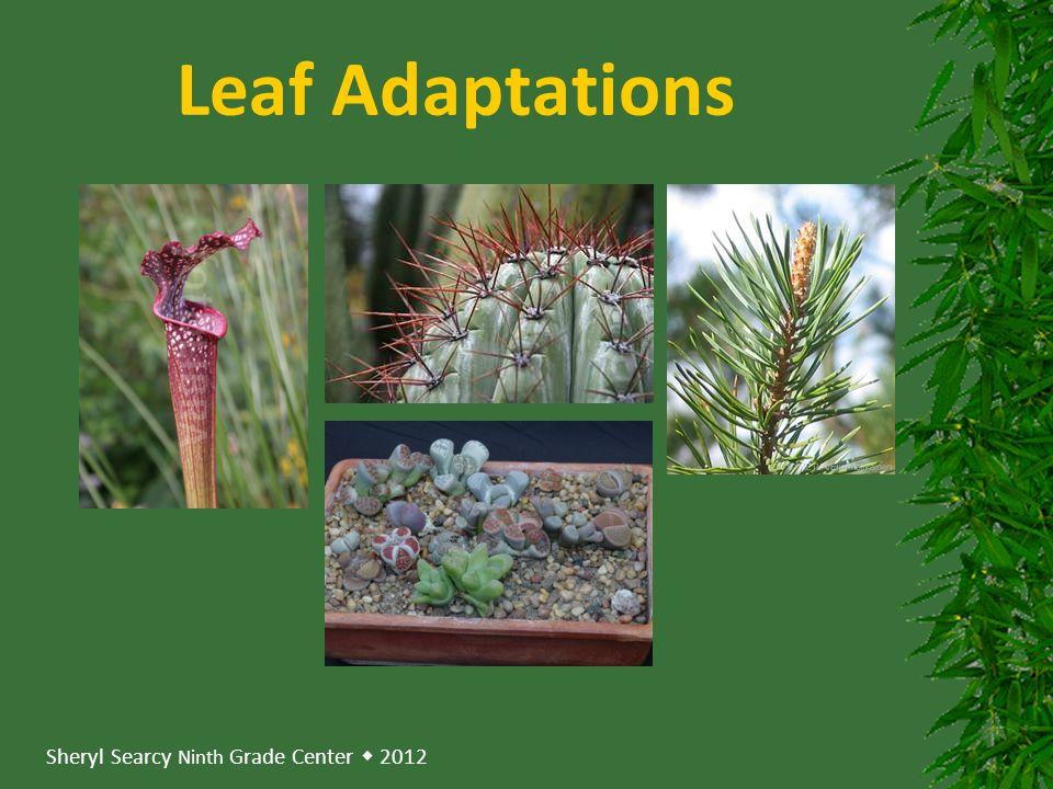 Sheryl Searcy Ninth Grade Center  2012 Leaf Adaptations
