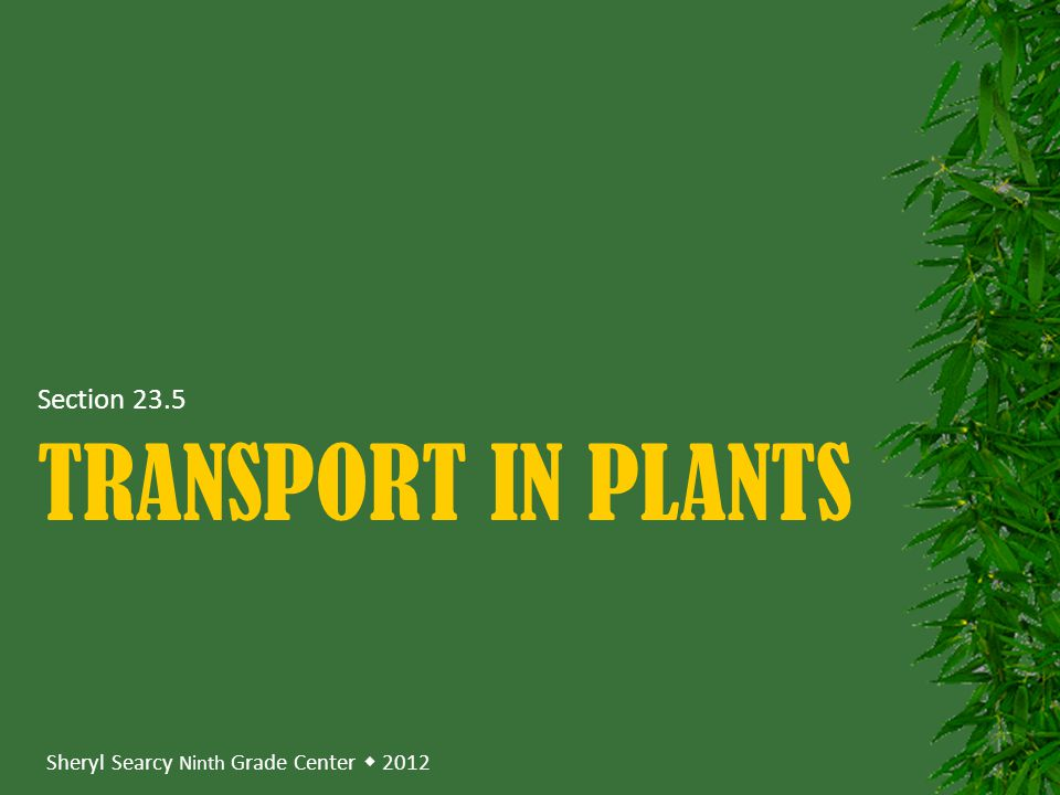 Sheryl Searcy Ninth Grade Center  2012 TRANSPORT IN PLANTS Section 23.5
