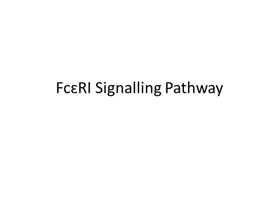 FcɛRI Signalling Pathway