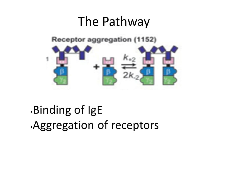 The Pathway Binding of IgE Aggregation of receptors