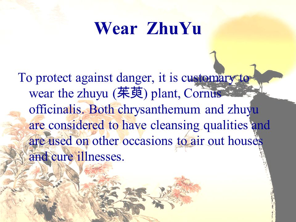 Wear ZhuYu To protect against danger, it is customary to wear the zhuyu ( 茱萸 ) plant, Cornus officinalis. Both chrysanthemum and zhuyu are considered
