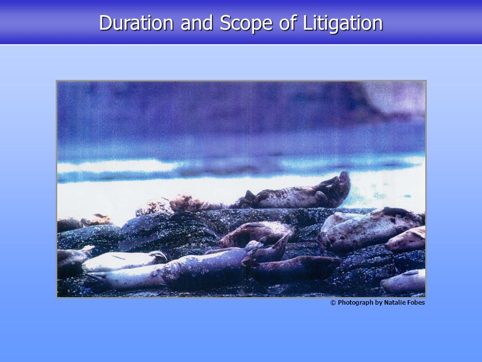 Duration and Scope of Litigation © Photograph by Natalie Fobes