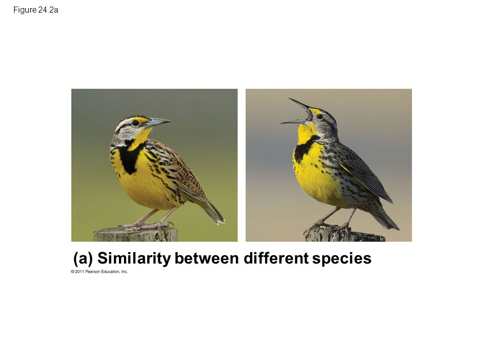 Figure 24.2a (a) Similarity between different species