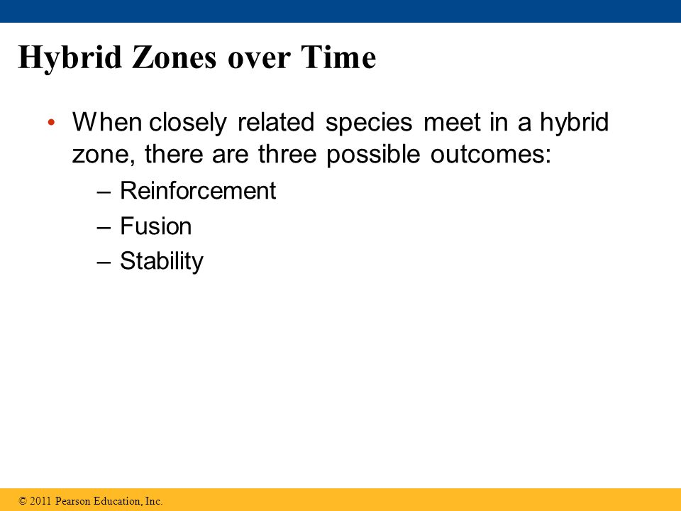 Hybrid Zones over Time When closely related species meet in a hybrid zone, there are three possible outcomes: –Reinforcement –Fusion –Stability © 2011