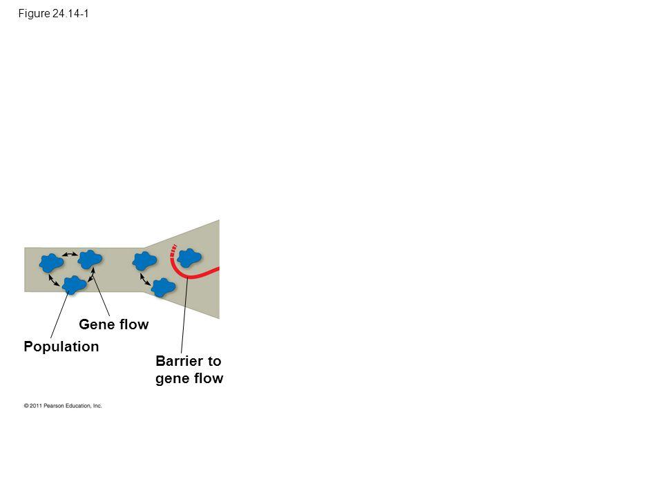 Figure 24.14-1 Gene flow Population Barrier to gene flow