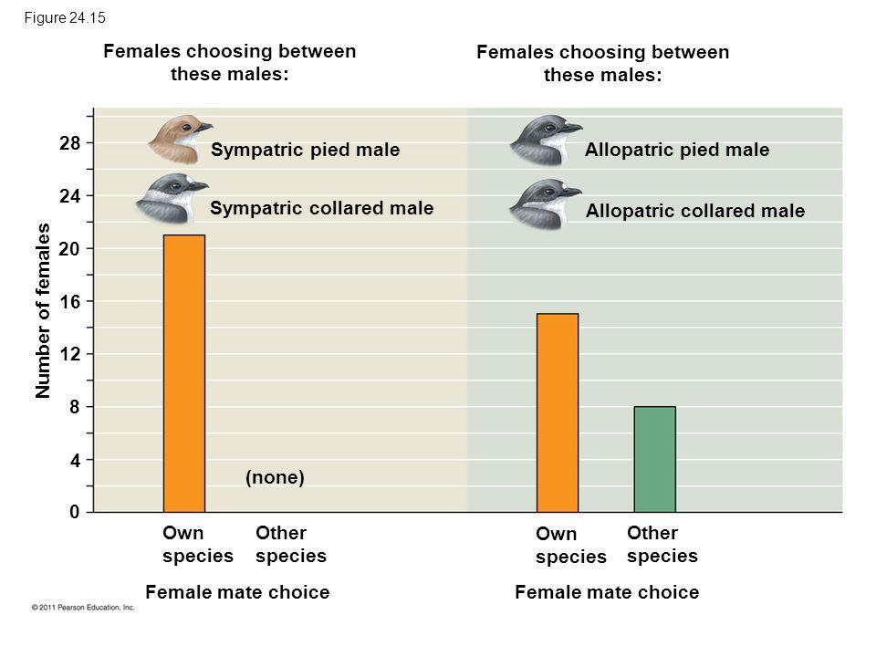 Figure 24.15 Females choosing between these males: Females choosing between these males: Sympatric pied male Sympatric collared male Allopatric pied m