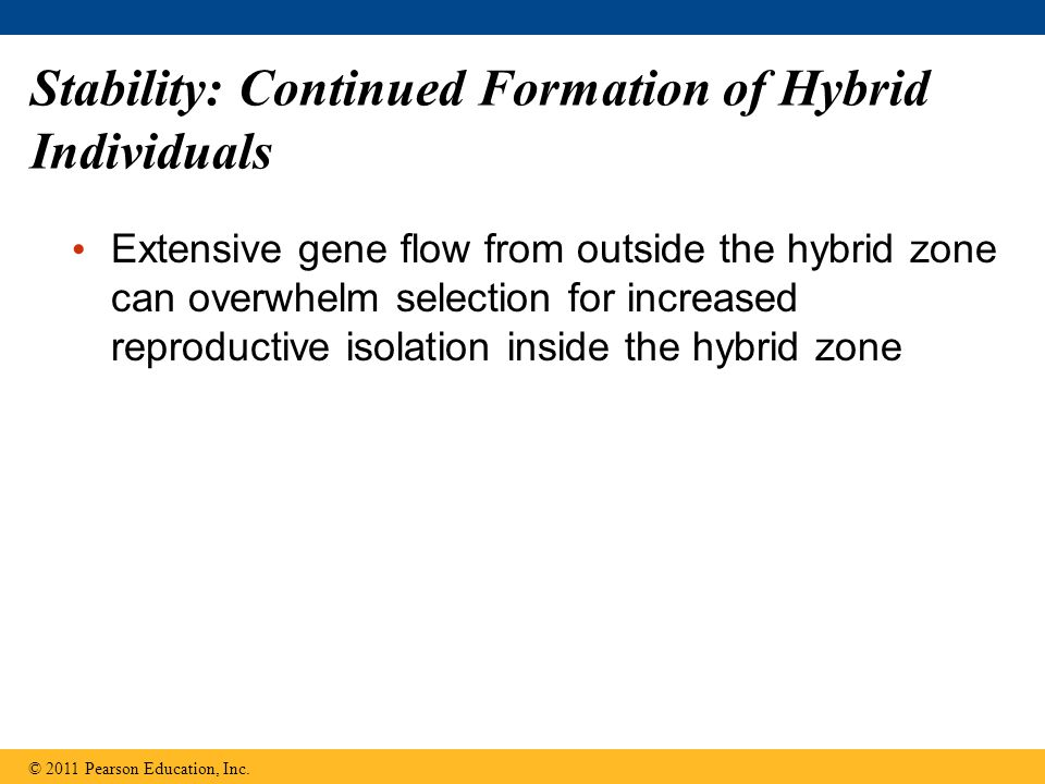 Stability: Continued Formation of Hybrid Individuals Extensive gene flow from outside the hybrid zone can overwhelm selection for increased reproducti