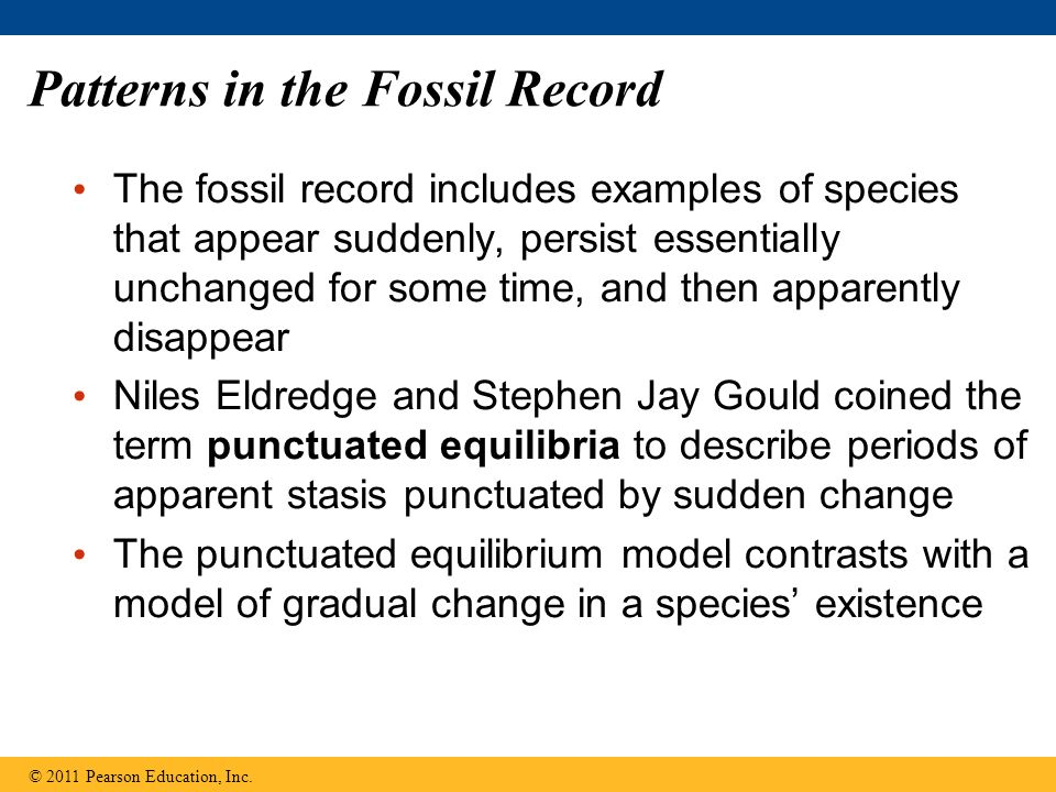 Patterns in the Fossil Record The fossil record includes examples of species that appear suddenly, persist essentially unchanged for some time, and th