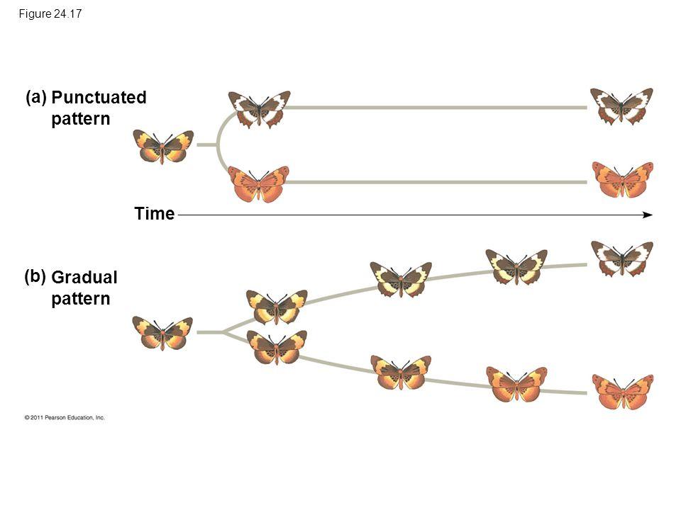 Figure 24.17 (a) Punctuated pattern Time (b) Gradual pattern