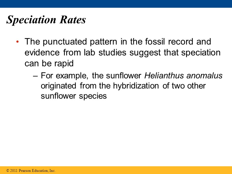 Speciation Rates The punctuated pattern in the fossil record and evidence from lab studies suggest that speciation can be rapid –For example, the sunf