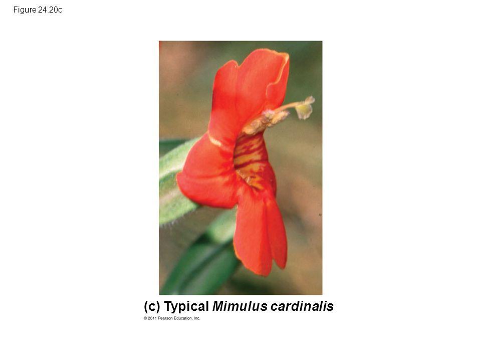 Figure 24.20c Typical Mimulus cardinalis(c)