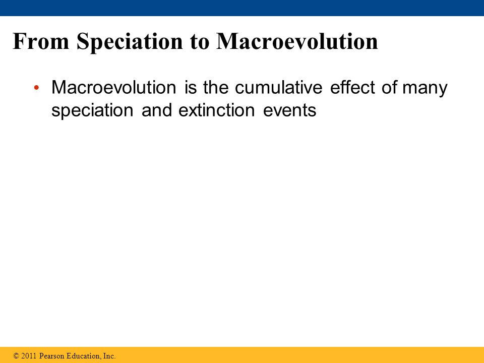 From Speciation to Macroevolution Macroevolution is the cumulative effect of many speciation and extinction events © 2011 Pearson Education, Inc.