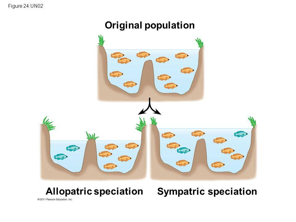 Figure 24.UN02 Original population Allopatric speciation Sympatric speciation