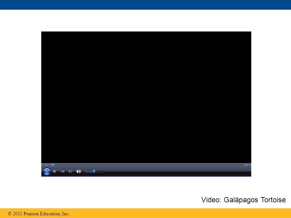 Video: Galápagos Tortoise