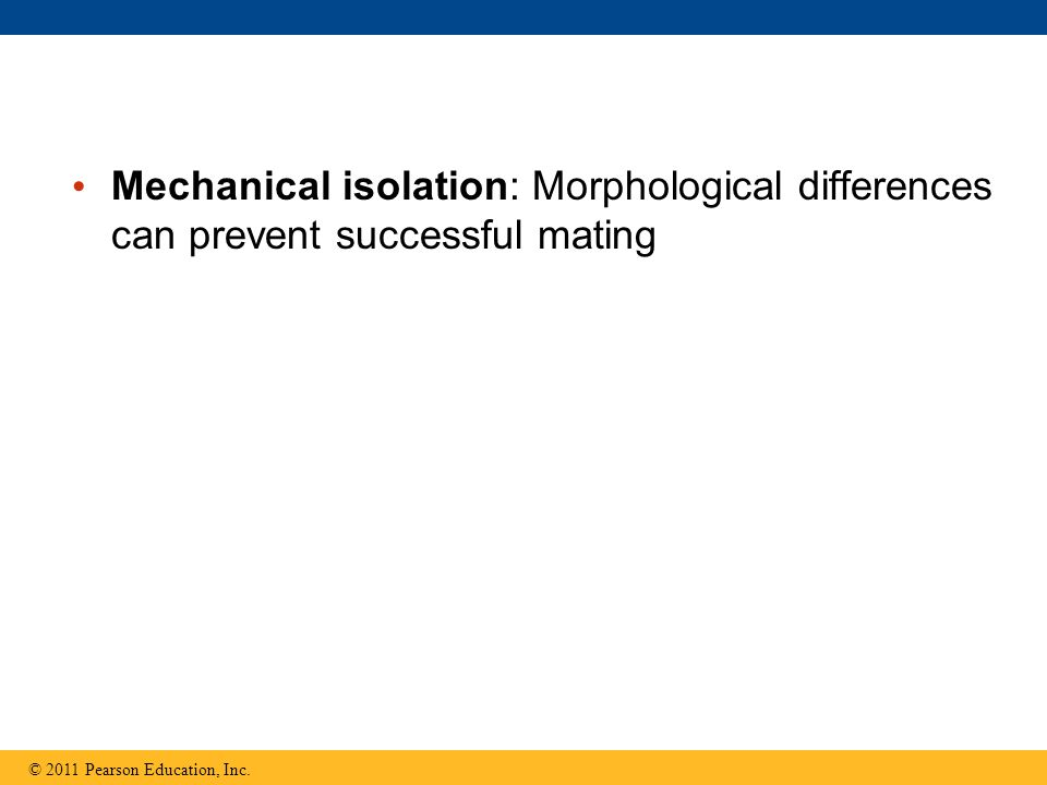 Mechanical isolation: Morphological differences can prevent successful mating © 2011 Pearson Education, Inc.