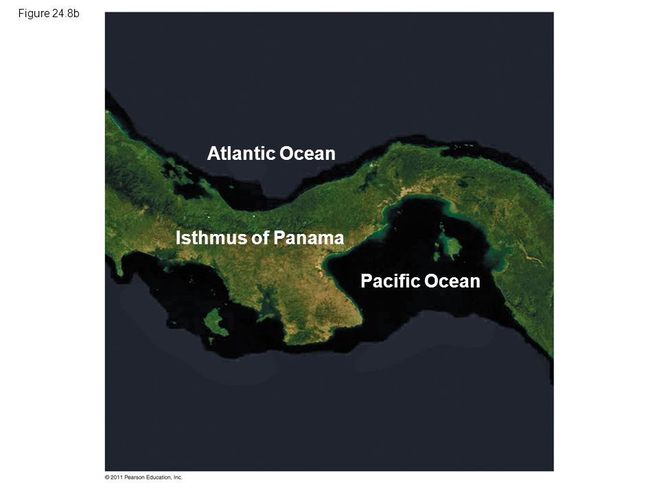 Figure 24.8b Atlantic Ocean Isthmus of Panama Pacific Ocean