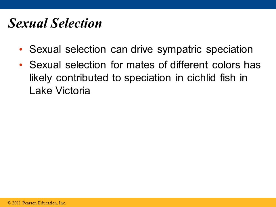 Sexual Selection Sexual selection can drive sympatric speciation Sexual selection for mates of different colors has likely contributed to speciation i