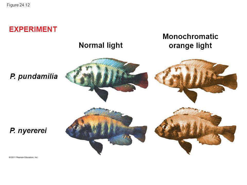 Figure 24.12 Normal light Monochromatic orange light P. pundamilia P. nyererei EXPERIMENT