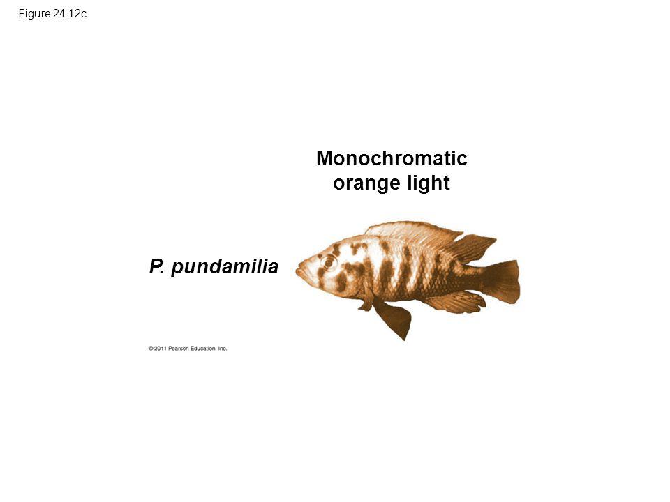 Figure 24.12c Monochromatic orange light P. pundamilia