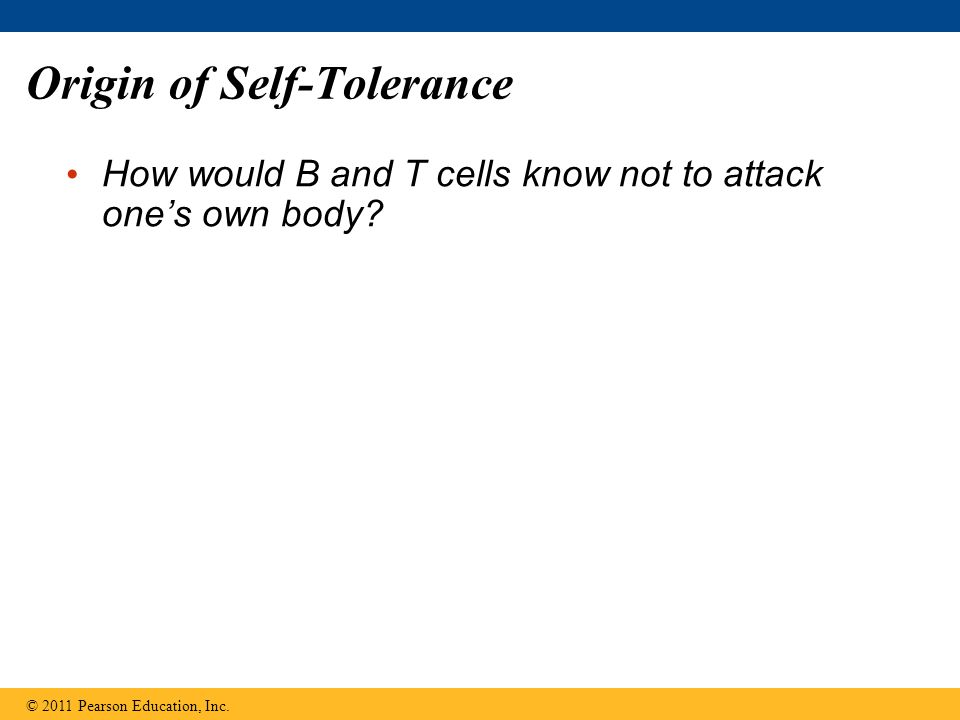 Origin of Self-Tolerance How would B and T cells know not to attack one's own body? © 2011 Pearson Education, Inc.