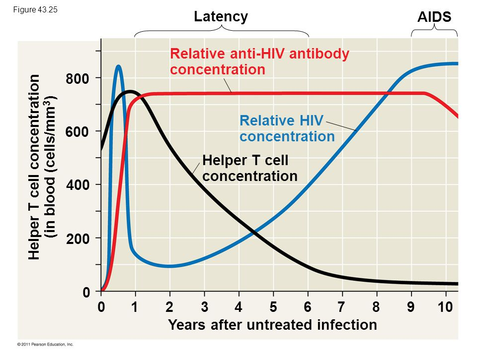 Latency AIDS Helper T cell concentration Years after untreated infection Helper T cell concentration (in blood (cells/mm 3 ) Relative anti-HIV antibod