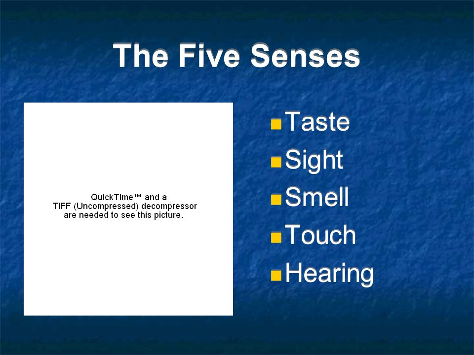 The Five Senses Taste Sight Smell Touch Hearing