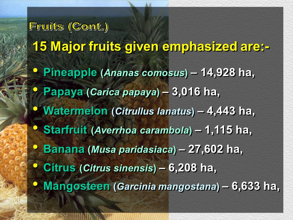 15 Major fruits given emphasized are:- Pineapple (Ananas comosus) – 14,928 ha, Papaya (Carica papaya) – 3,016 ha, Watermelon (Citrullus lanatus) – 4,4