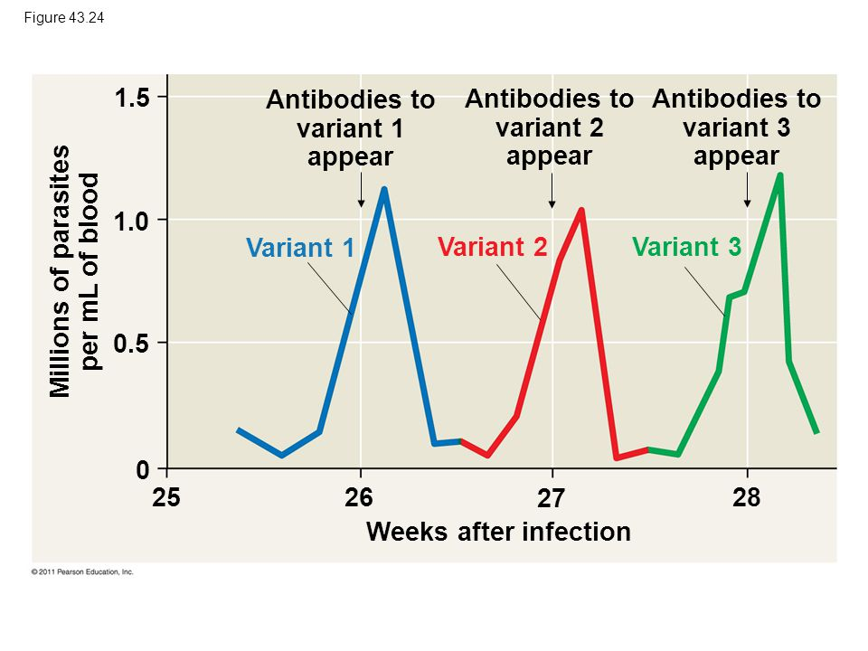 Figure 43.24 Weeks after infection Antibodies to variant 1 appear Antibodies to variant 2 appear Antibodies to variant 3 appear Millions of parasites