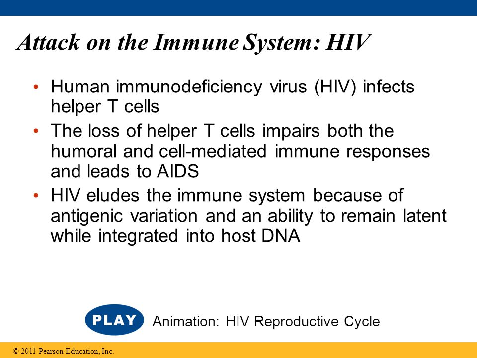 Attack on the Immune System: HIV Human immunodeficiency virus (HIV) infects helper T cells The loss of helper T cells impairs both the humoral and cel