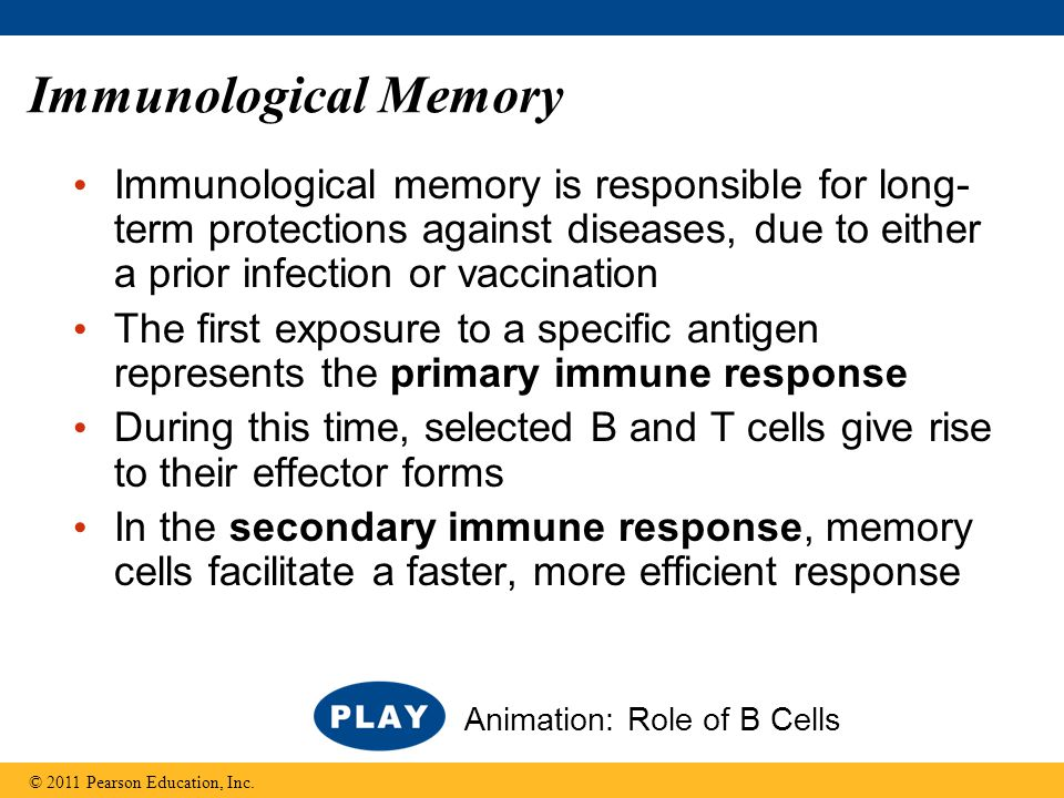 Immunological memory is responsible for long- term protections against diseases, due to either a prior infection or vaccination The first exposure to