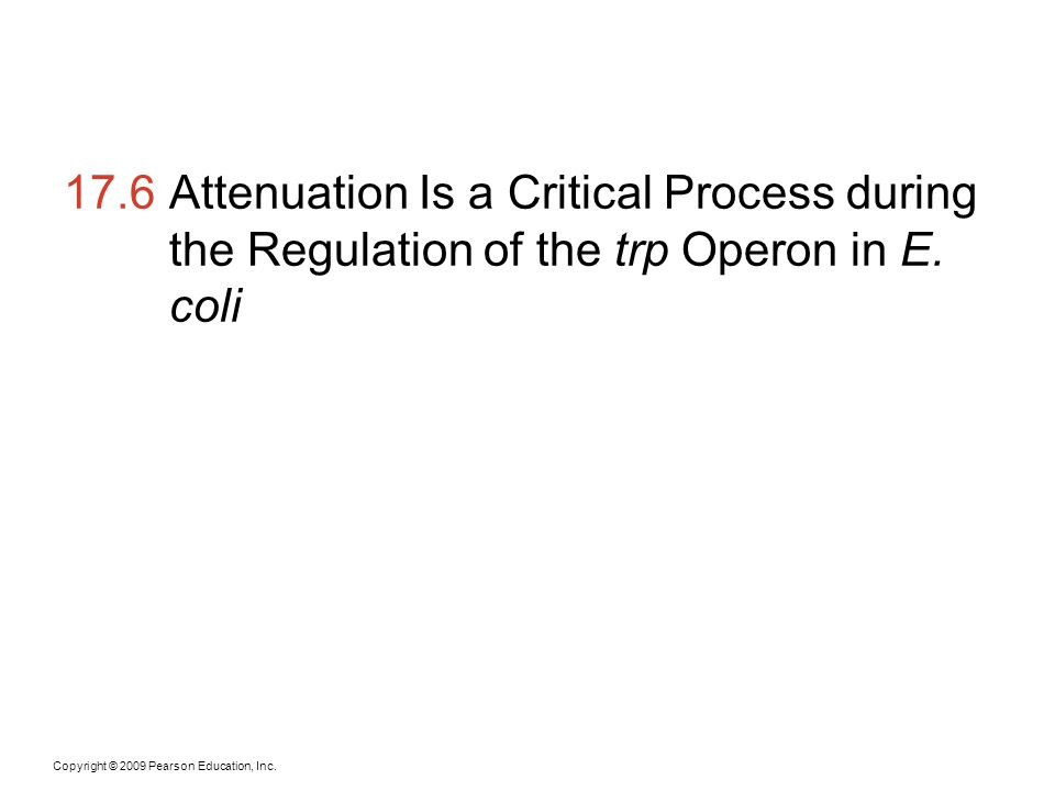 Copyright © 2009 Pearson Education, Inc. 17.6Attenuation Is a Critical Process during the Regulation of the trp Operon in E. coli