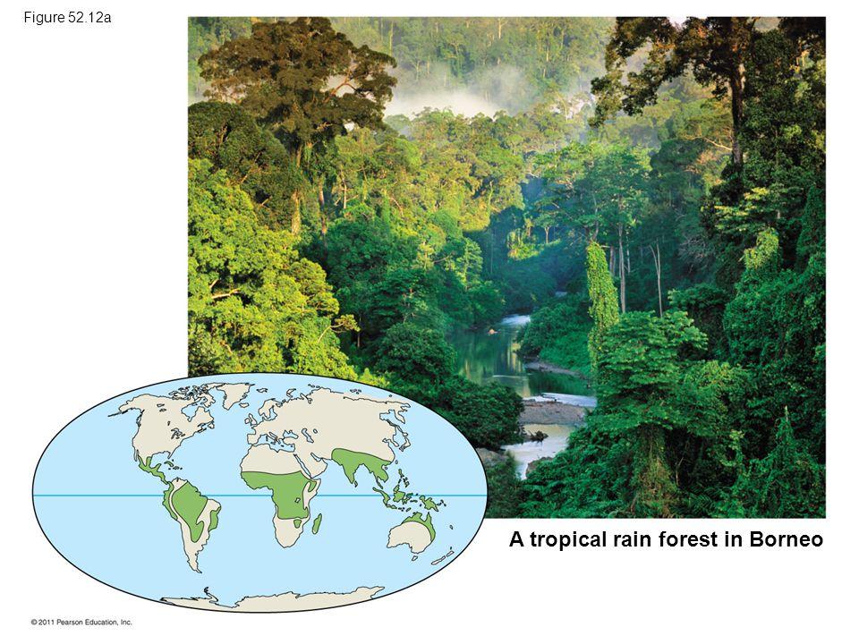 A tropical rain forest in Borneo Figure 52.12a